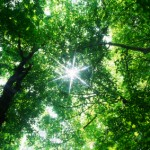 TreeLightXSmall